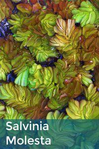 BioRemedy - Algal & Aquatic Weed Control