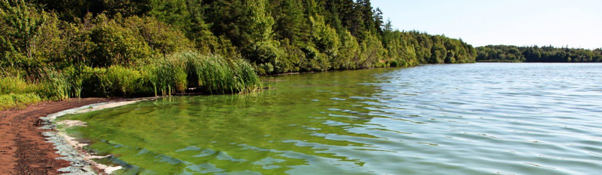5 Easy steps to control an overabundance of pond algae