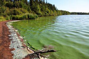 pondalgae1 bioremedy