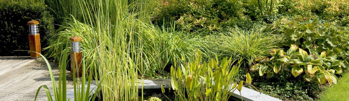 Tips on reducing pond algae and keeping your outdoor fish pond healthy