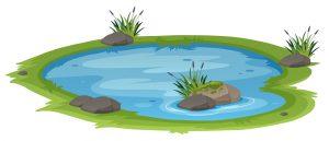 M pond 03