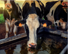 dairy farm 2