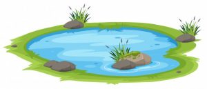 natural pond white background 1639 5635