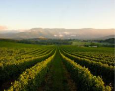wineries 1 2 1 2